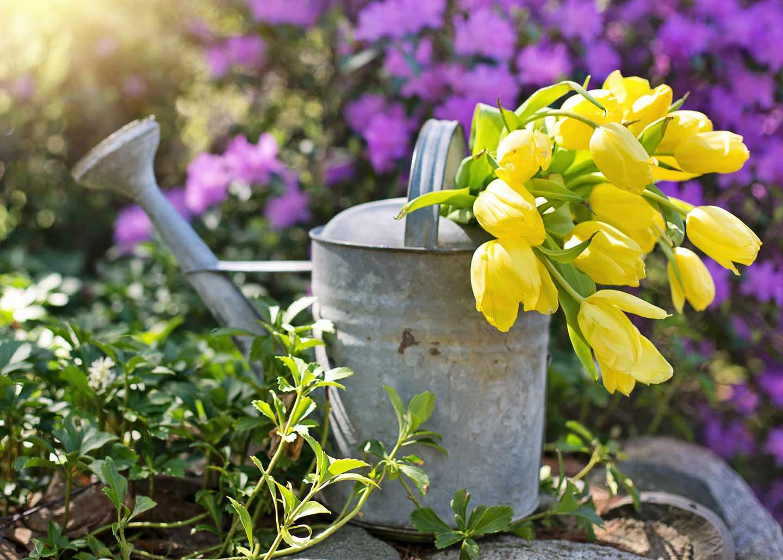 Giesskanne mit Blumen