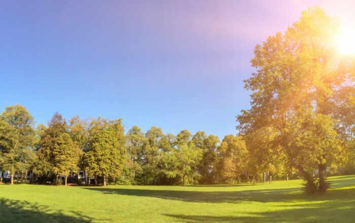 Grundstück mit Wald zu verkaufen